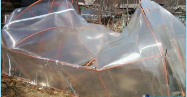 Greenhouse from polycarbonate with their hands