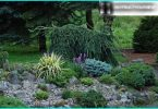 Juniper: planting and maintenance rules, the choice of varieties